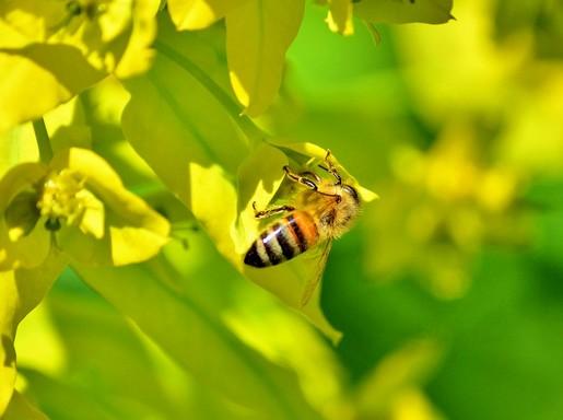 Méh egy virágon, Kép: pixabay