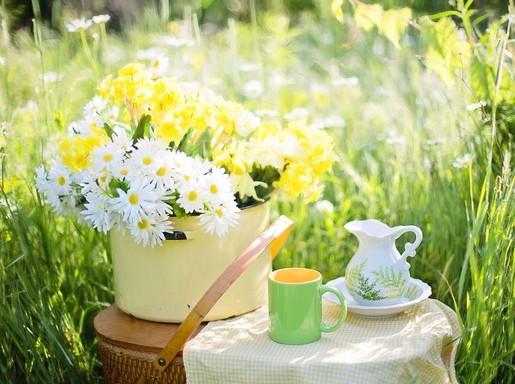 Nyár teáskannával és margarétával, Kép: pixabay