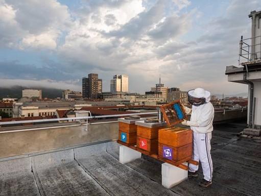 Városi méhész ljubljanai háztetőn. Kép: Jost Gantar