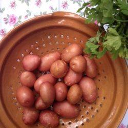 köret, petrus, szuper kaja, újkrumpli, vaj