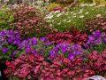 kánikula, kert, locsolás, meleg, tanács