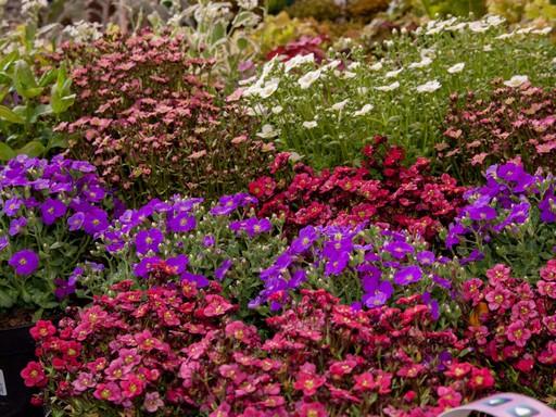 Kerti növények, Kép: praktiker