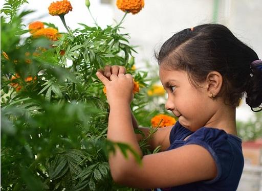Kislány büdöskével, Kép: pixabay