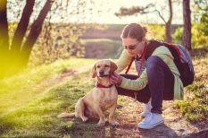 állatorvos, házi kedvenc, kullancs, megelőzés