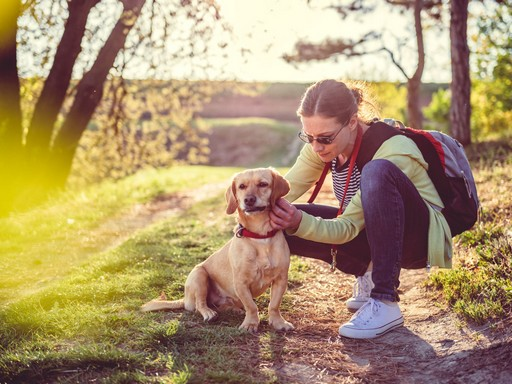 Kutya és gazdája az erdőben, Kép: sajtóanyag