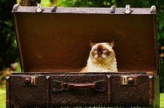 állatorvos, kisállat, kutya, macska, uniós előírások, utazás, vadászgörény