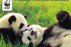afrikai elefánt, állatvédelem, bélyeg, Benedek Imre, borneói orángután, jegesmedve, óriáspanda, WWF