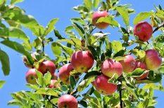 állatkerti program, gyümölcsfa, kertészkedés, kikapcsolódás, Megyeri Szabolcs, program, takarékoskodás, ültetés