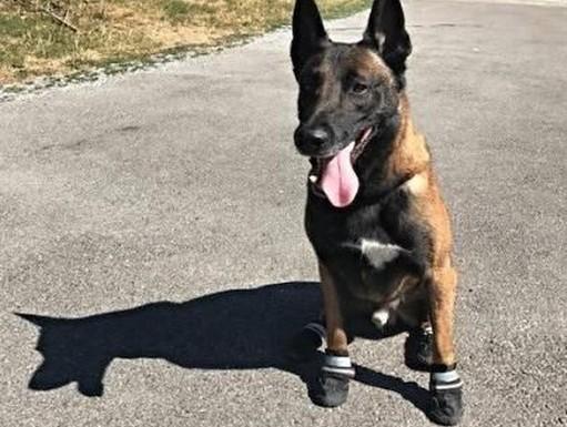 Kutya cipőben, Kép: swissinfo