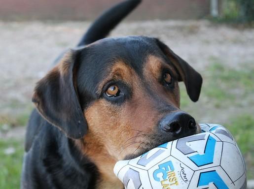 Kutya lasztival, Kép: pixabay