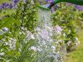 gyomirtás, kánikula, kert, nyár, praktikák, víz
