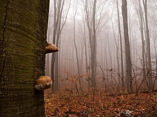 Őszi erdő, Kép Sefag Zrt.