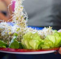 22. Vegetáriánus Fesztivál, buli, egészséges táplálkozás, magas vérnyomás, orvos, pajzsmirigy, vegán étrend