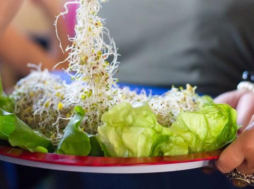 Csírás saláta, Kép: Vegán Fesztivál