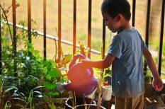 család, illatok, kert, kertépítés, kikapcsolódás, növényápolás, otthon