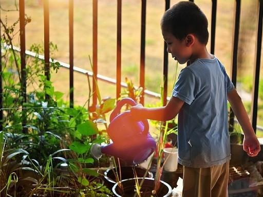 Kisfiú öntözi a növényt, Kép: Megyeri Szabolcs