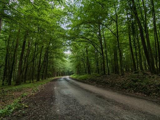 Zselici erdő, Kép: SEFAG Zrt.