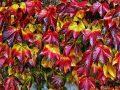 a nap képe, mozgás, ősz, séta, termés, vadszőlő, vénasszonyok nyara