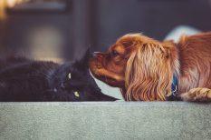 állatorvos, cica, fertőzés, kutya, megelőzés, parazita, utazás