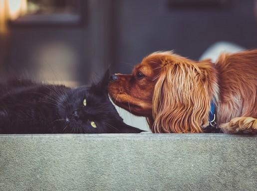 Cica és kutya, Kép: pixabay