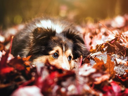 Kutya a levelek közt, Kép: pixnio
