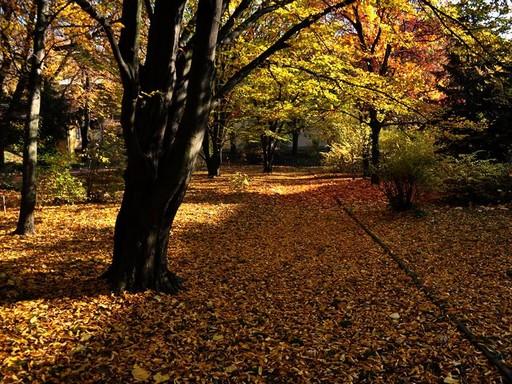 Sárga levelek Pécsett, Kép: Mánfai György