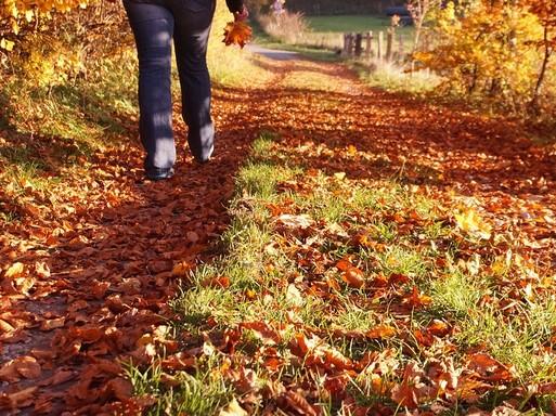 Séta az őszi erdőben, Kép: pixabay