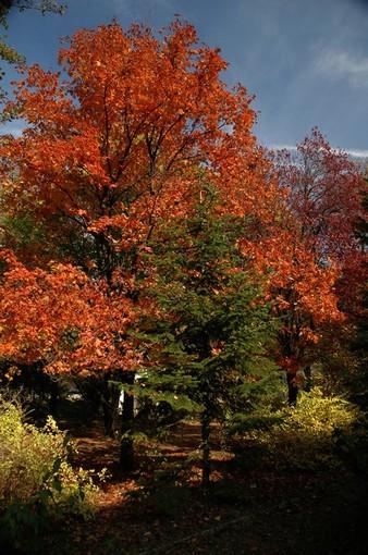 Sokszínű ősz, Kép: Mánfai György