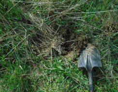ásás, kert, kerti munka, otthon, trágya, ültetés