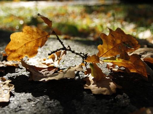 Őszi levelek reggel, Kép: pixabay