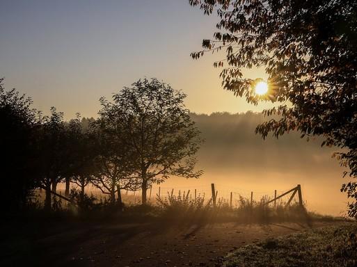 Ködös ősz, Kép: pixabay