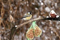 etetés, hideg, itatás, madár, tél