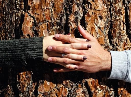 Szerelmes kezek, Kép: pixnio
