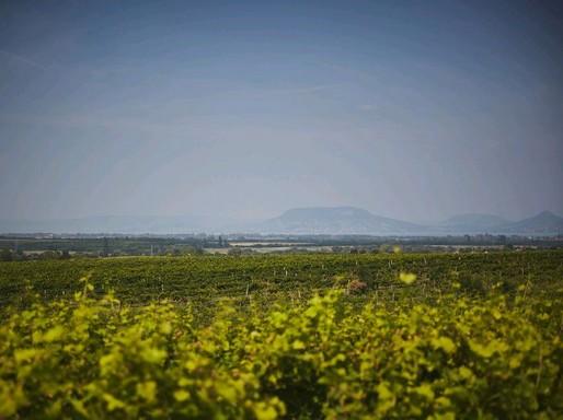 Dél-Balaton borvidék, háttérben a Badacsony, Kép Furmint Photo