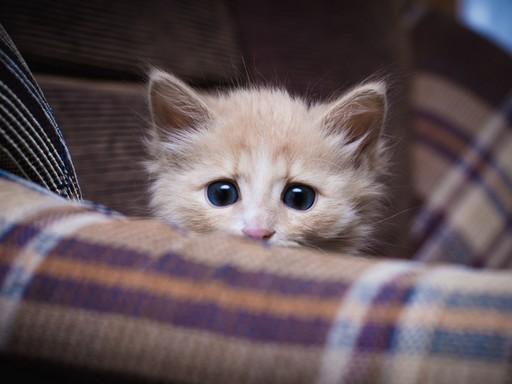 Félős cica, Kép: sajtóanyag
