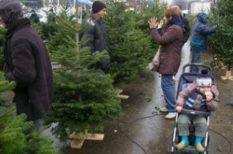csomagolás, karácsonyfatalp, kertészmérnök, vágott fenyő, vásárlás