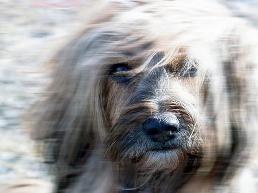 Kutya a szélben, Kép: pixabay