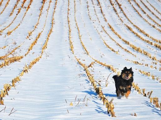 Kutya hóban, Kép: pixabay