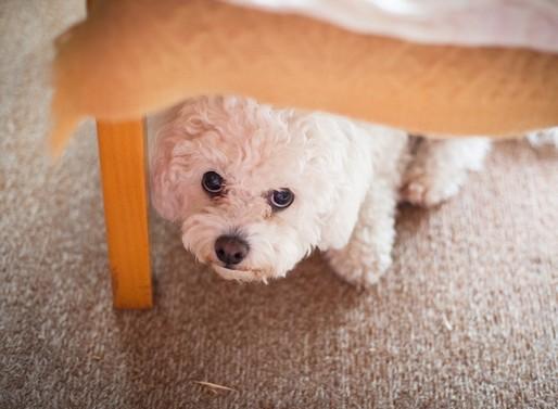 Nagyon félős kutyus, Kép: sajtóanyag