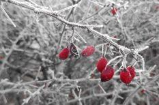 fejfájás, görcsös panaszok, hideg, influenza, tél