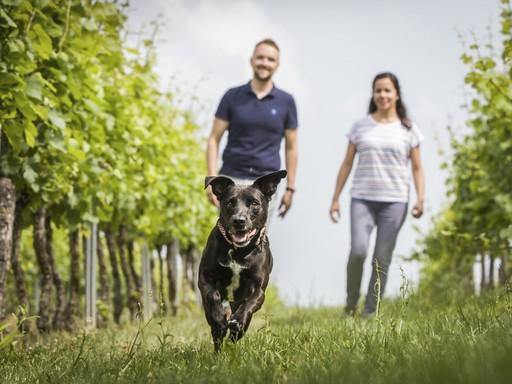 Házaspár kutyával sétál, Kép: Boehringer Ingelheim