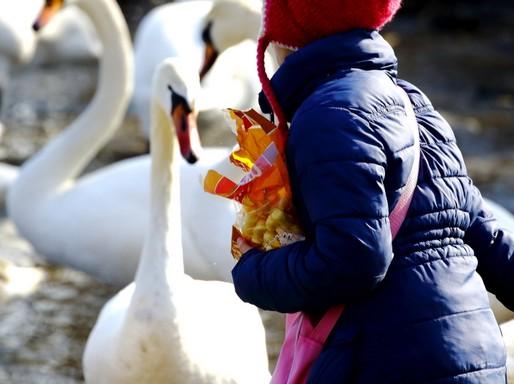 Madáretetés, a chipsek még a kenyérnél is veszélyesebbek, Kép: Orbán Zoltán