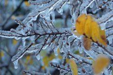 fagy, frontok, görcs, hideg, ízületi panaszok, kivizsgálás, tél