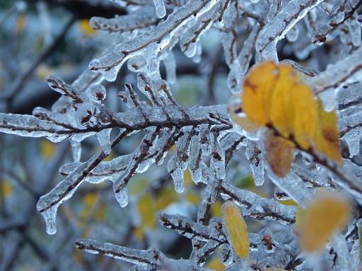 Tél, Kép: pixabay