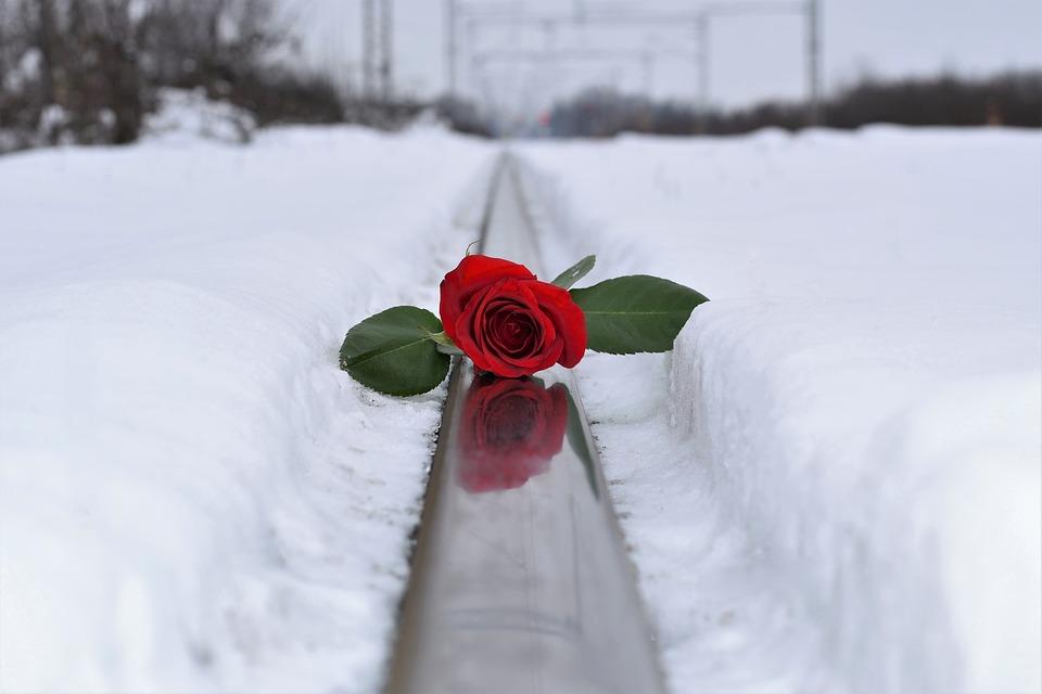 Vörös rózsa jégen, hóban, Kép: pixabay