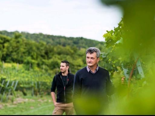 Xavier Bas Baslé grafikus és Vida Péter a szőlőben, Kép: furmintphoto