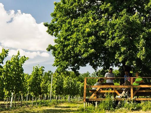 Garam mente és a szőlő, Kép:: www.bottfrigyes.sk