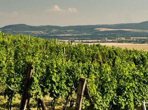 Garam mente, Kép: www.bottfrigyes.sk
