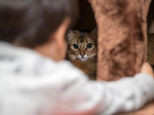 Kisgyerek háttal, szemben macska, Kép: pixabay