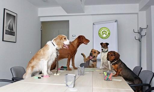 Kutyaértekezlet, Kép: kutyabarat.hu